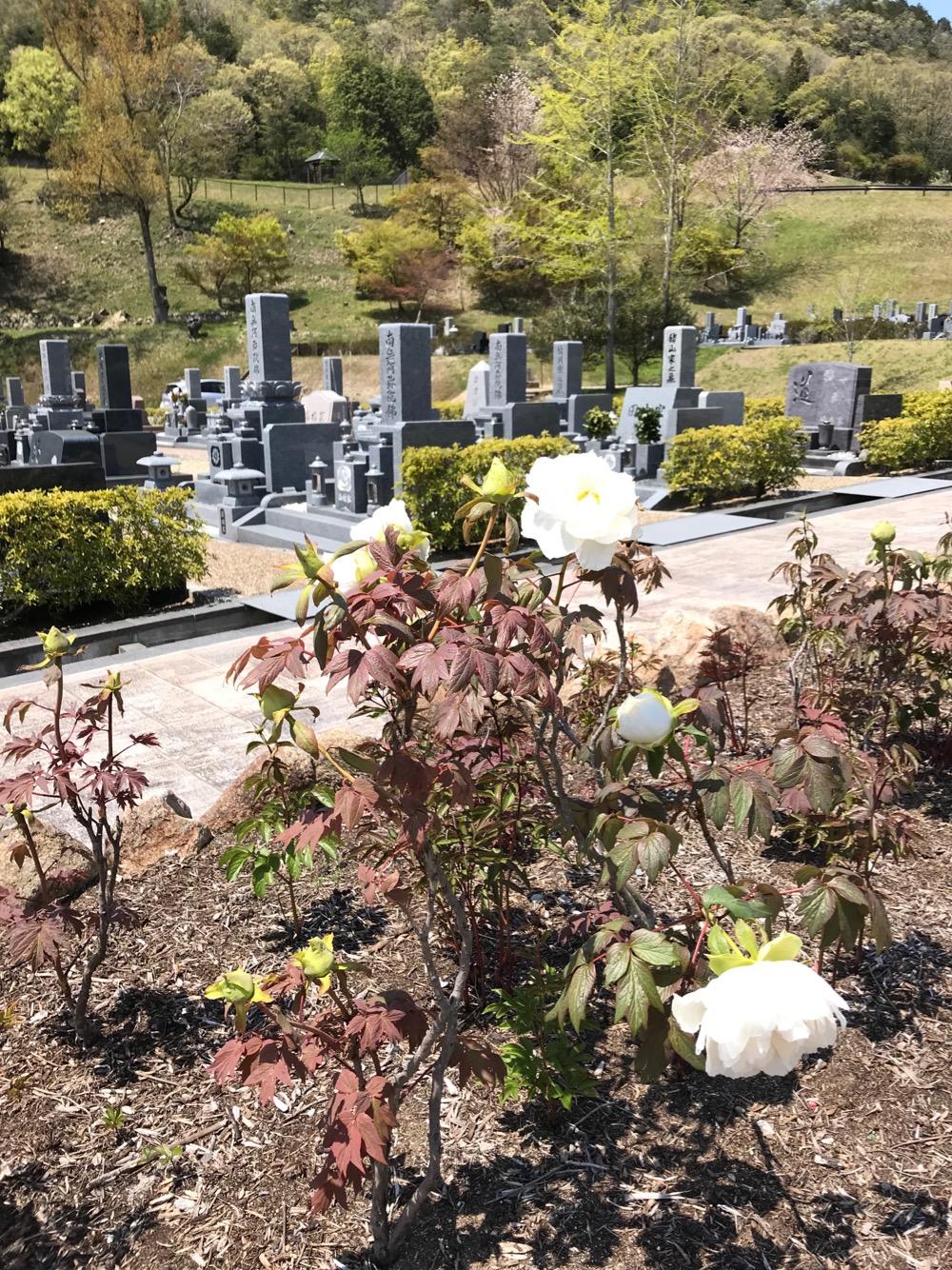 宝塚市立すみれ墓苑で墓地使用者募集中