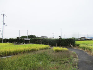 番賀の墓1(八幡市)