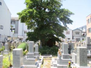 対馬江・黒原・東黒原地区墓地11(寝屋川市)