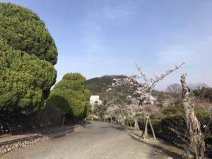 21.4.1_西宮市営甲山墓園の桜。